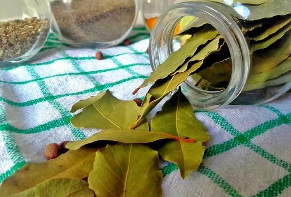 лавровый лист лечебные свойства и применение